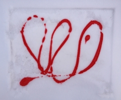 snow (bloom)